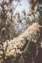 bianca pasquini_-14