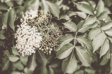 bianca pasquini_-15